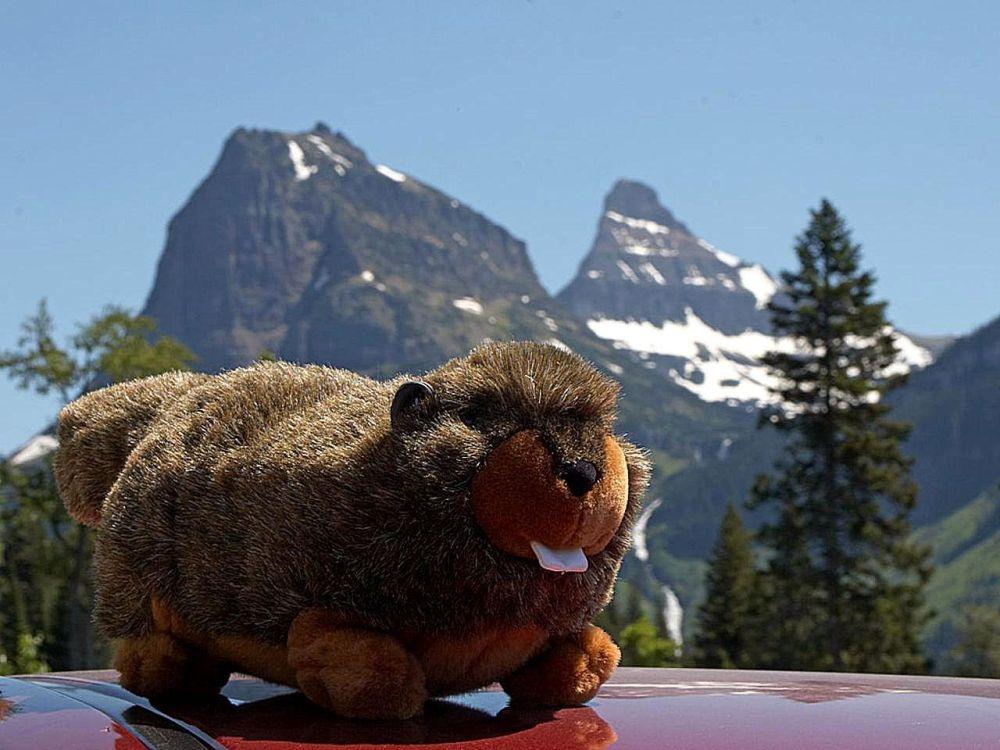 plush-marmot-toy